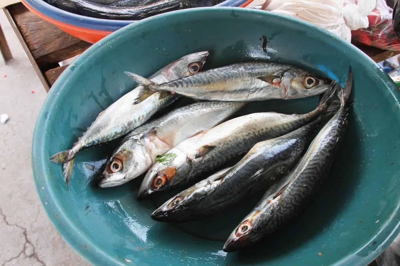 pesca en cabo blanco